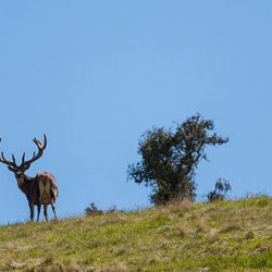 Wanaka Accommodation Discover Dingleburn Activities Guided Hunting 250x250 - Gallery
