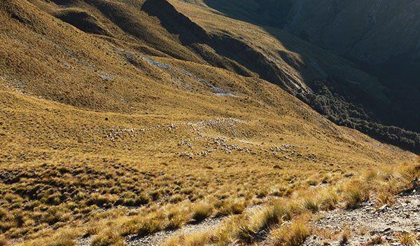 Wanaka Accommodation Discover Dingleburn Activities History - Activities