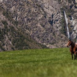 Horse riding and trekking Discover Dingleburn High Country Station Wanaka NZ 250x250 - Gallery